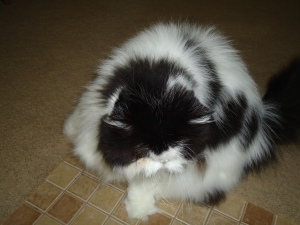 Their sweet little Persian, she has no face